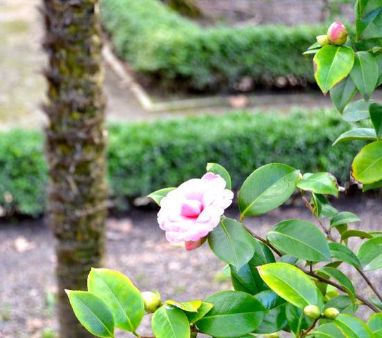 Flor retocada cv