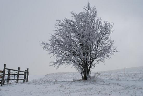 Winter cv