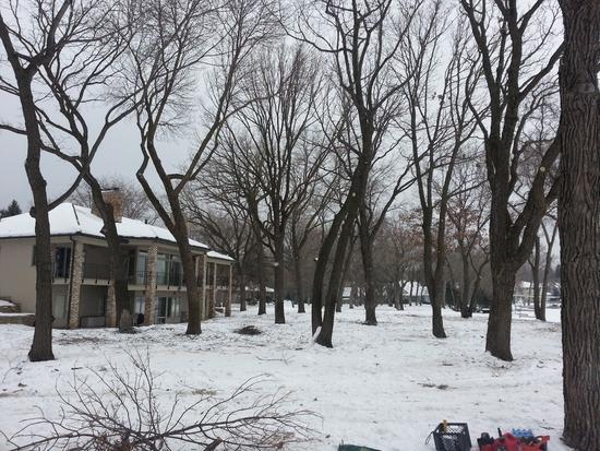 Winter trees 5house cv