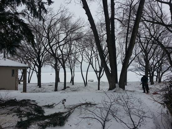 Wintertrees2 cv