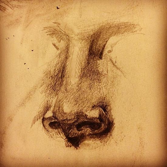 Nose cv
