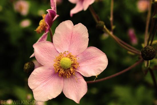 Flower edit cv