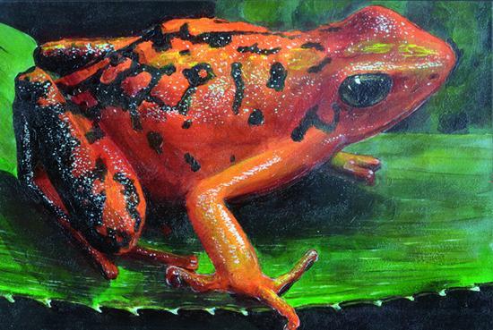 Frogs acrylic cv