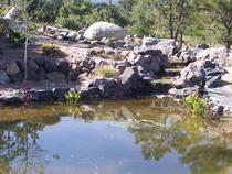 Pond1 cv