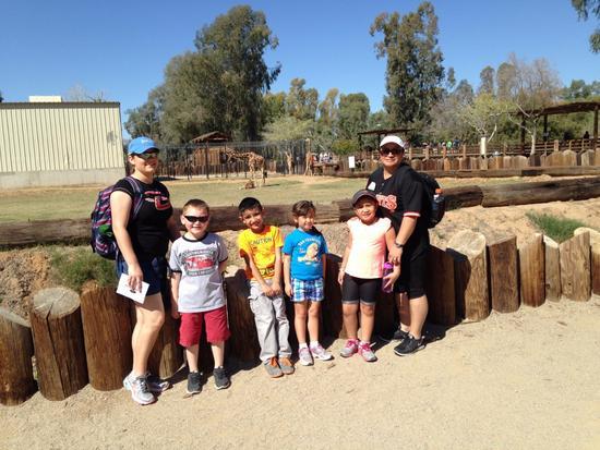 Zoo cv