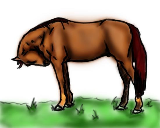 Horse2 copy cv