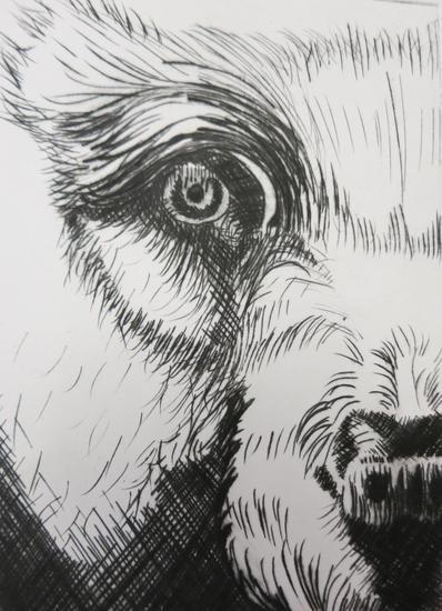 Bear print cv