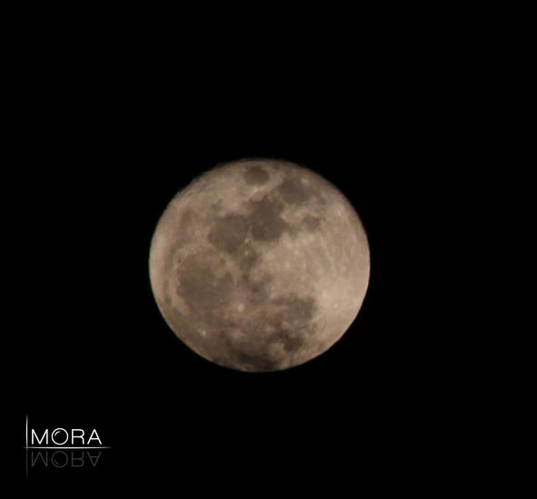 Luna cv