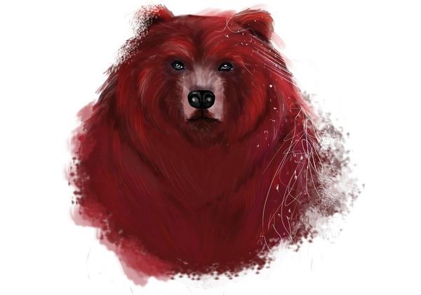 Bear cv