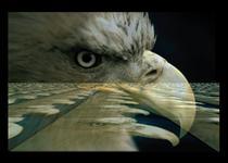 Eagle on the plane cv