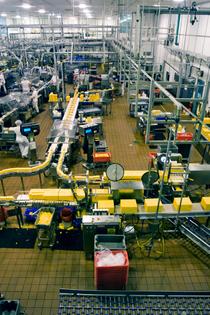 Manufacturing 1 cv