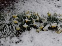 Spring time orig cv