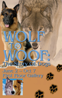 Wolf introsm cv