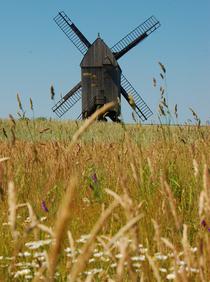 Windmill cv