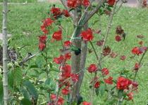 Colibrisclm 16  cv
