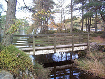 Cumbriawoodland02888 cv
