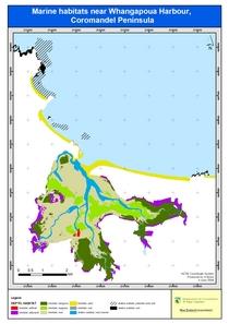 Whangapoua coromandel marine habitats2 cv