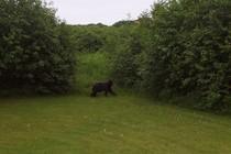 Moose 006 cv