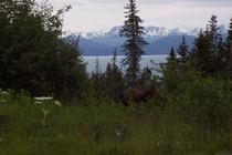 Moose 009 cv