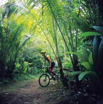 Jungle biking pic cv