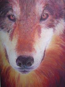 Coyote cv