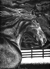 Horse scratch  cv