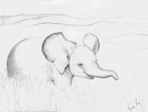 Elephant baby pencil  cv