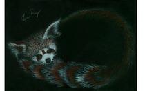 Red fox cv