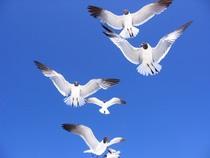 Flock cv