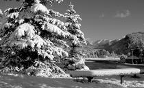 Snow cv