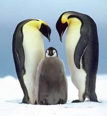 Antarctica cv