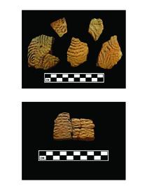 Artifacts 11 cv