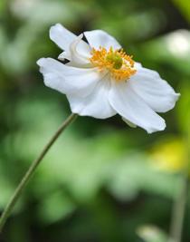 Wild flower cv