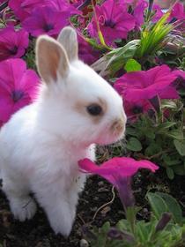 Bunnies0212 cv