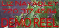 Newdemo cv