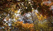 Autumn cv