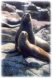 Seals wildlife cv