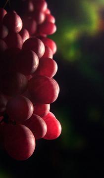 Grapes cv
