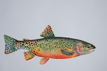 Greenback cutthroat trout cv