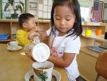 Kari high tea cv