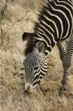 Zebra3 cv