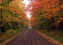 Fall trees cv