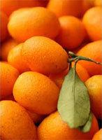 Nagami fruit cv