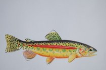Golden trout cv