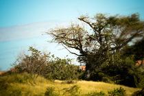 Trees 4312 cv