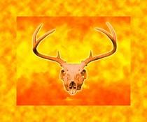 Skull4 sb cv