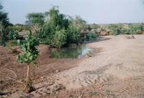 Pond cv