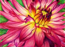 Pink flower cv