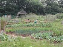 Garden cv