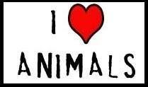 Animals cv